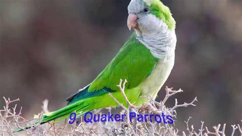 Birds Top top 10 best pet birds