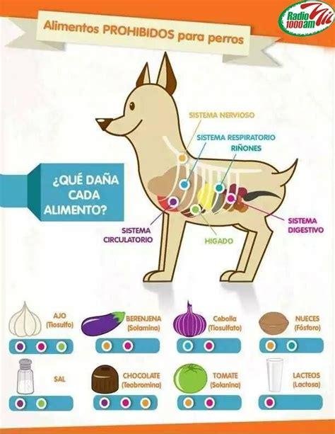 alimentos prohibidos para el c 17 mejores ideas sobre alimentos para mascotas en