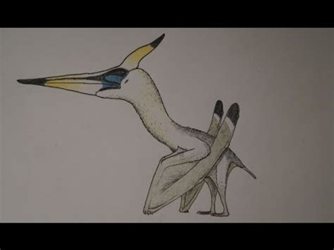 Free Accurate Search How To Draw An Accurate Pteranodon