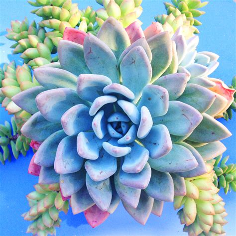 Interesting Succulents by 7 Diy Iphone Shots That Can Turn Your Home Into An Art