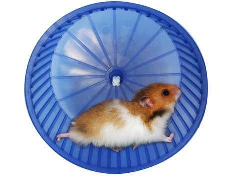 Wheel Kincir Hamster Mainan Hamster keeping your hamster busy not bored celia haddon
