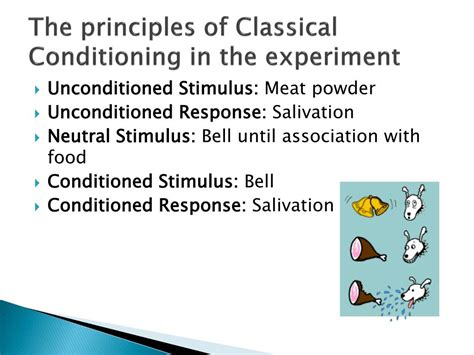 basic principles of classical ppt ivan pavlov powerpoint presentation id 172247