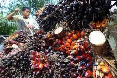 Prediksi Minyak Kelapa Sawit bpdp ks pantau abadi sawit dari kuartal iv 2017 informasi komoditi