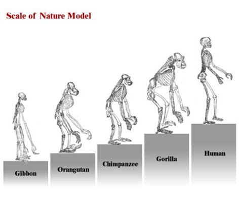 Modification Utation by Charles Darwin Iii Biology Visionlearning