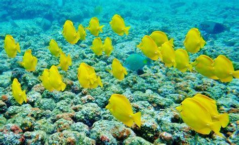 Best Snorkeling In Hawaii is on the Big Island