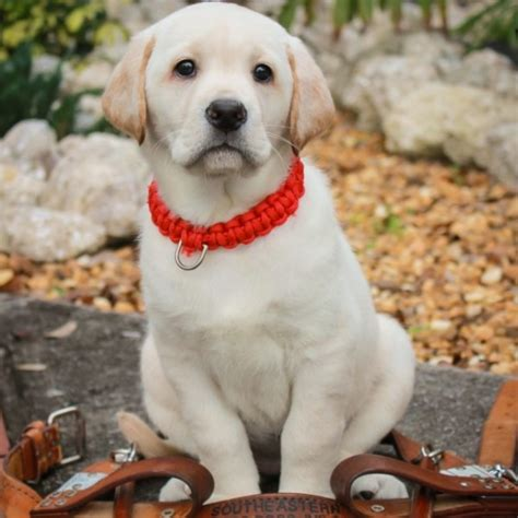 southeastern guide dogs stetson college of news florida s school