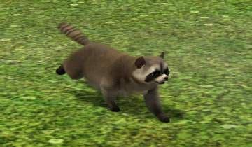 mod  sims      raccoon   pet