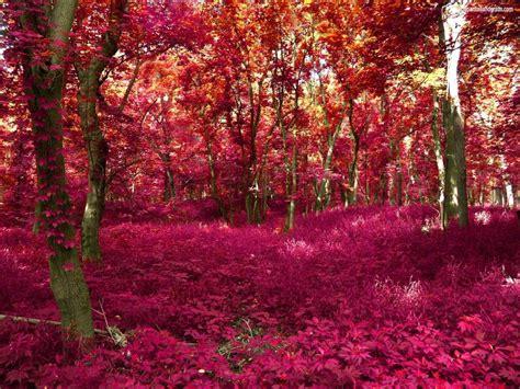 imagenes de paisajes hermosos para descargar fondos de pantalla de paisajes para descargar gratis para