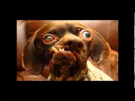 los mas feos del mundo top 20 de los perros mas feos del mundo youtube