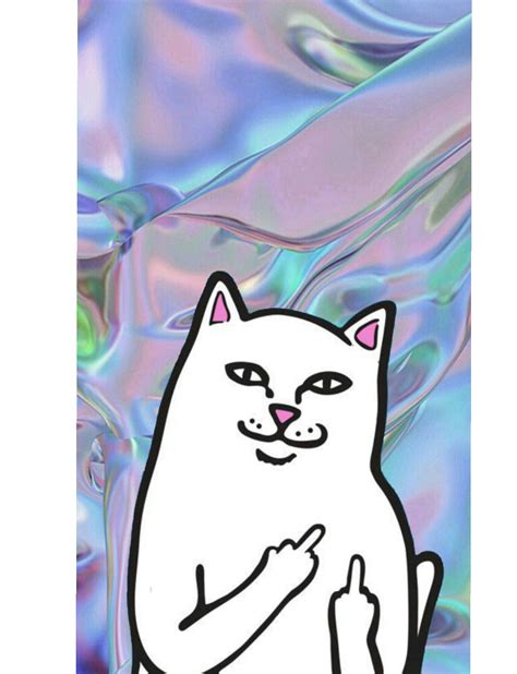 cat ripping wallpaper ripndip ripndip wallpaper ripndip pinterest