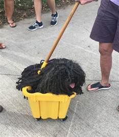 dogs that look like mops that looks like a mop gets the costume boing boing