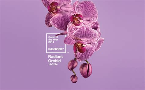 color of the year 2014 graphics radiant orchid pantone color of the year 2014
