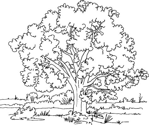 tree coloring pages tree coloring pages