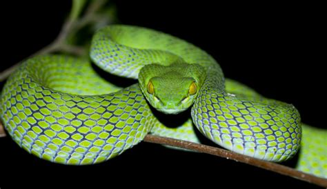 Snake Day by It S World Snake Day But Don T Mail Venomous Snakes