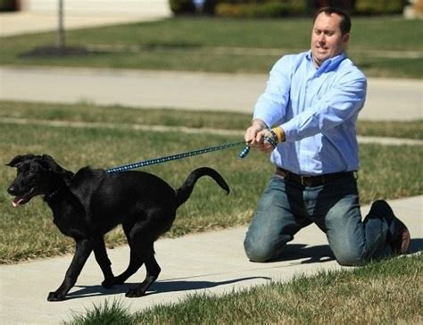 how to a on leash guide on how to leash your thehappypooch