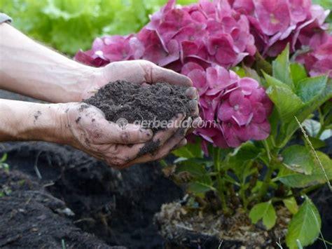 Quand Planter Les Hortensias by A Quelle Periode Planter Les Hortensias