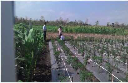 irigasi pipa sederhana  tanaman cabe distan