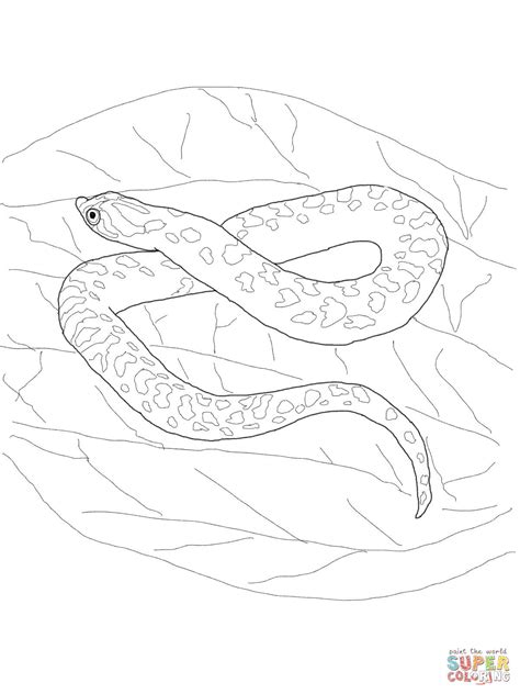bull snake coloring page hognose snake coloring page free printable coloring pages