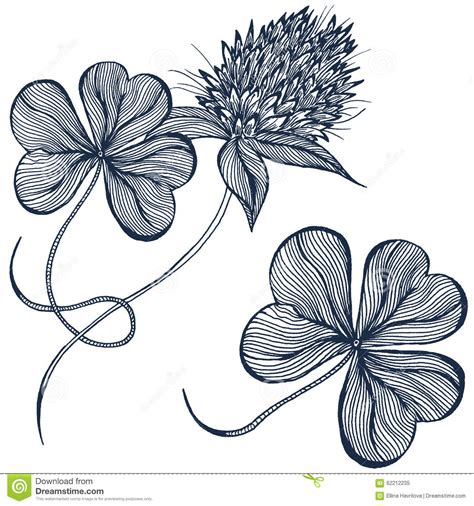 sketchbook clover drawing of clover flowers royalty free stock image