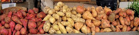 sweet potato wikipedia file sweet potatoes padangpanjang jpg wikimedia commons