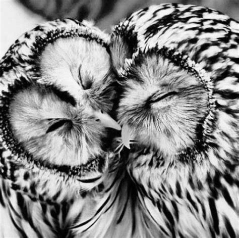 Owl Lovers by Animal Black And White Cute Love Image 590976 On