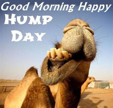 Funny Hump Day Memes - 17 best ideas about hump day camel on pinterest hump day
