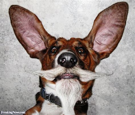 dogs with beards animals with human beards pictures freaking news