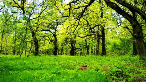 top 10 list of amazing forests in the world youtube
