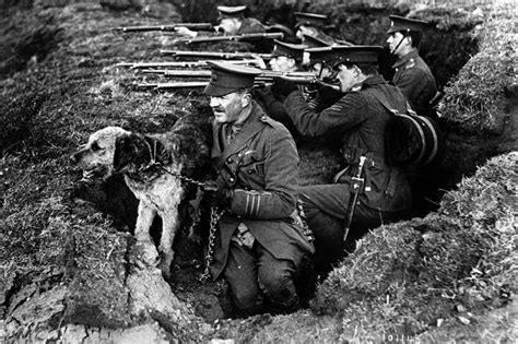 war dogs real guys the 9 million unsung heroes of ww1 dogs horses and carrier pigeons made victory