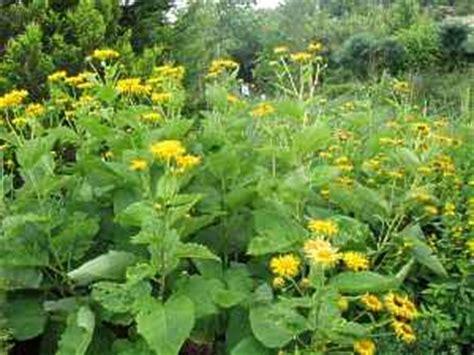 lehmboden garten str 228 ucher stauden lehmboden pflanzen f 252 r schwere lehmige b 246 den