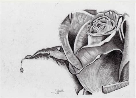 dibujos realistas a lapiz de flores imagenes de rosas dibujadas con lapiz imagui