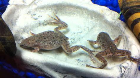 Feeding Frog frog feeding time