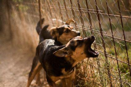 neighbors barking stopping dogs barking methods to stop neighbors barking