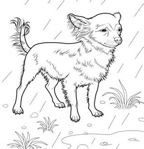 Image Search Chiwawa Coloring Pages Dog Breeds Picture Chihuahua Coloring Page