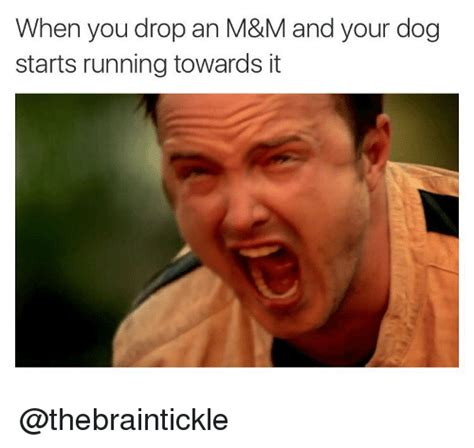 M Meme - when you drop an m m and your dog starts running towards