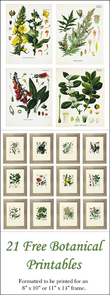 printable art prints free 21 free botanical prints