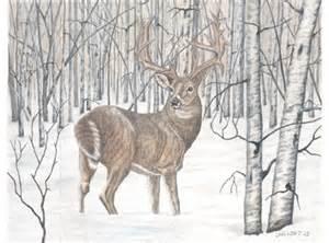 deer whitetail buck aspens winter scene by lauri kraft
