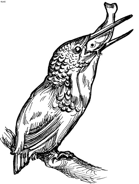 kingfisher bird coloring page birds coloring pages kids website for parents