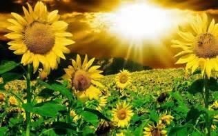 Watch movies online top 5 of gambar bunga matahari mar 2016 watch