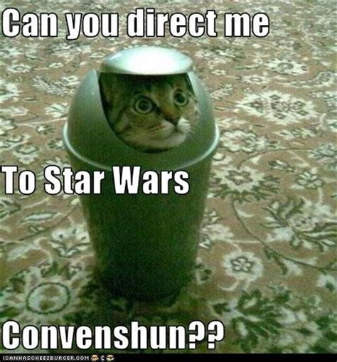 Star Wars Cat Meme - star wars funny cat convention dump a day