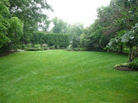 grass for backyard backyard with hedges and green grasses maintenance tips