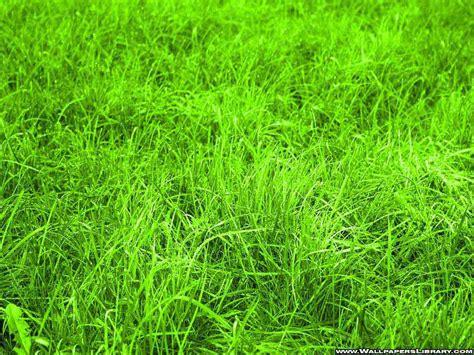 Green Grass green grass wallpapers your title