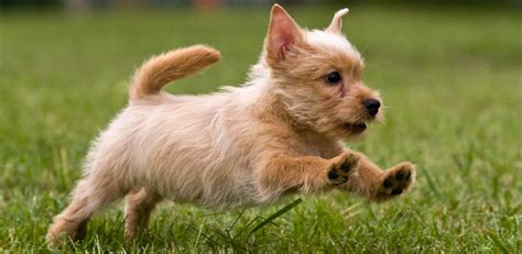 can you take a puppy home at 6 weeks puppy exercise requirements the happy puppy site
