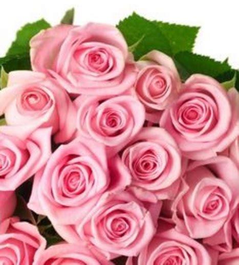 wallpaper bunga ping arti dan makna bunga mawar berbagai warna bibitbunga com