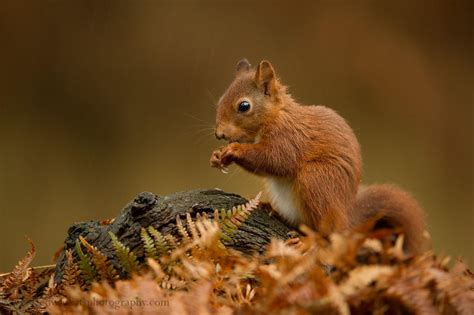 animal seasons squirrels autumn 1848358784 beautiful photos of animals fully enjoying the autumn season