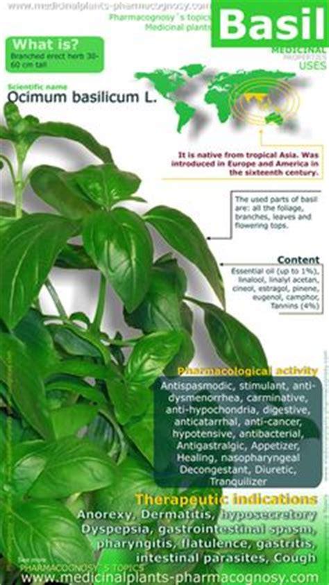 God S Garden Pharmacy Detox Tea by Horseradish Sauce Tips And Health On