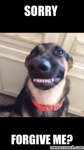 Dog Smiling Meme - funny dog meme smile www imgkid com the image kid has it