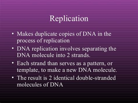 dna replication and protein synthesis venn diagram dna replication and protein synthesis