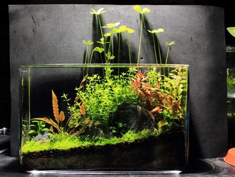 Ultimate Soil Aquascape 17 best images about aquascaping on cichlids aquarium setup and sorority