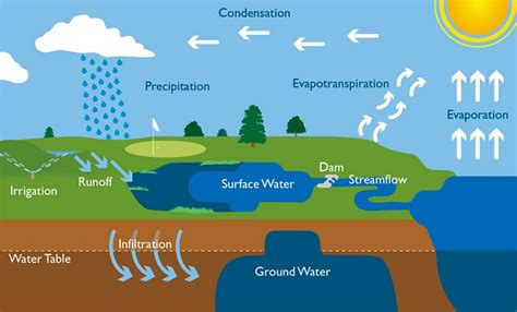 diagram of the water cycle water cycle diagram diagram site
